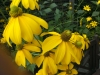 13-yellow-petals-jpg