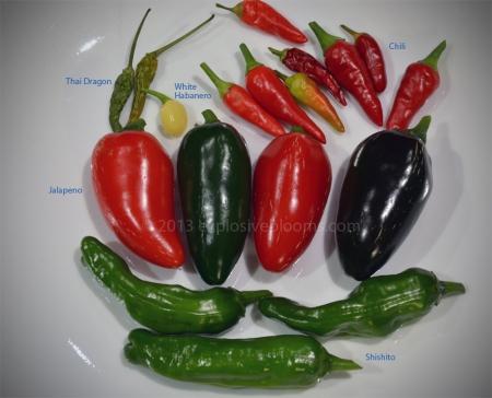 2013-homegrown-peppers-jpg
