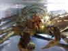 02-king-crab-mouth