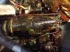 07-5-pound-lobster