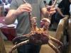 08-7-pound-king-crab