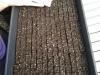 Tray of soil blocks