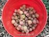 2012_foodshare_05