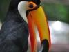 22_birds