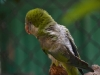 24_birds