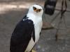 31_birds