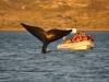 10_whale