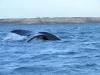 5_whale