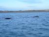 6_whale