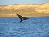 8_whale