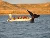 9_whale