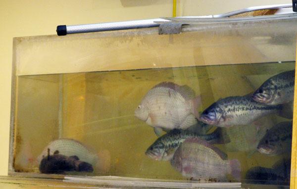 Live fish vs dead fish