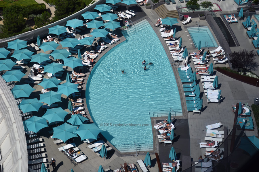 pool-view-from-vdara