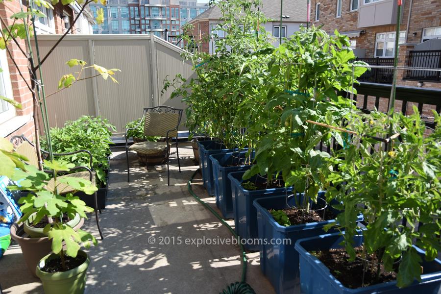 july-15-garden