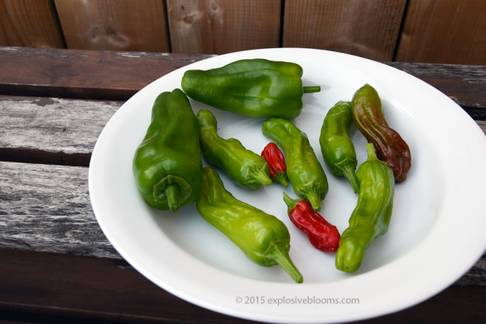 plate-of-peppers