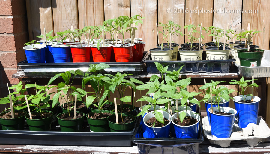 plants-sunning