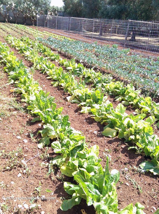 agriturisimo-crops