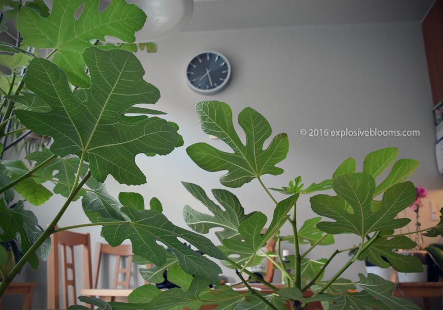 garden-day-end