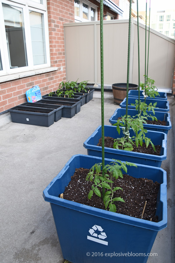 my-garden-may-8