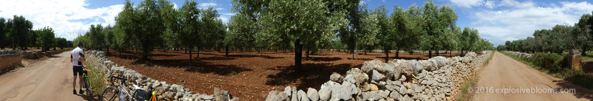 D3-olive-grove